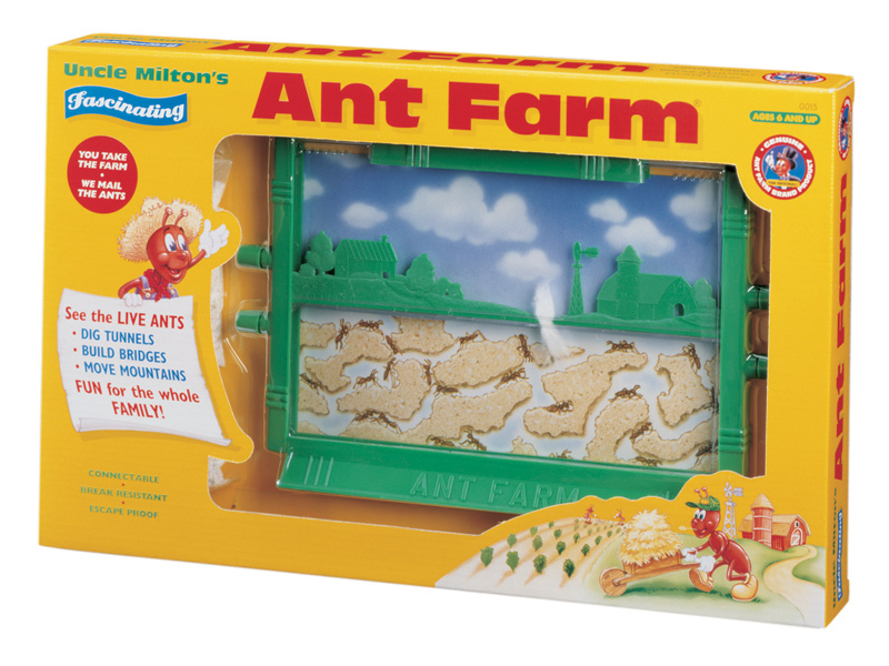 Image result for ant farm pics